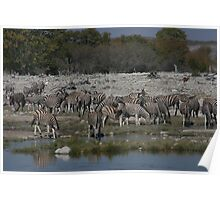 Lost in the Crowd- Etosha National Park Poster