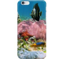 Colorful tropical fish with corals and starfish underwater iPhone Case/Skin