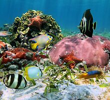 Colorful tropical fish with corals and starfish underwater by Dam - www.seaphotoart.com