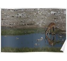 Just a quick drink- Etosha National Park Poster