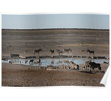 Party at the Watering hole- Etosha National Park Poster
