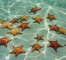 Starfishes on sand underwater by Dam - www.seaphotoart.com