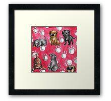 Dog Breeds - Cane Corso Framed Print