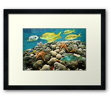 Starfish and tropical fish in a coral reef Framed Print