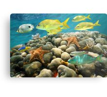 Starfish and tropical fish in a coral reef Metal Print