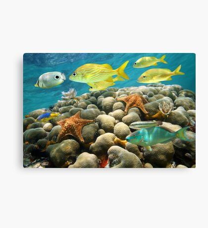 Starfish and tropical fish in a coral reef Canvas Print