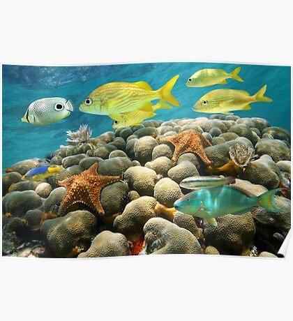 Starfish and tropical fish in a coral reef Poster
