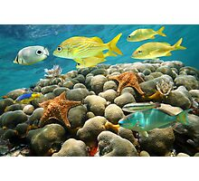 Starfish and tropical fish in a coral reef Photographic Print