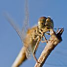 The Dragonfly with a Smile. by Melina Roberts