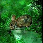 Some Bunny by Eileen McVey