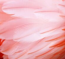 Flamingo Feathers by Cynthia48
