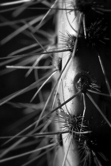 Too Close Cactus by Bob Larson