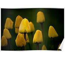 Yellow Tulip #2 Poster