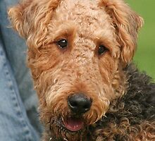Airedale Terrier by Jenny Brice
