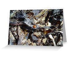Ladybird in the Seaweed ~ Marazion, Cornwall Greeting Card