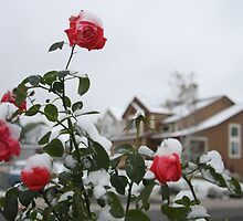 Unexpected snow - Denver, Colorado by Marianna Tankelevich