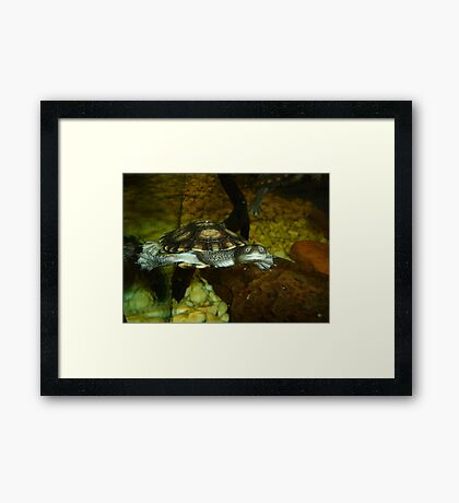 Long Neck Turtle Framed Print