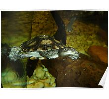 Long Neck Turtle Poster