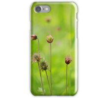 A meadow of avens iPhone Case/Skin