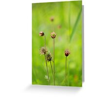 A meadow of avens Greeting Card