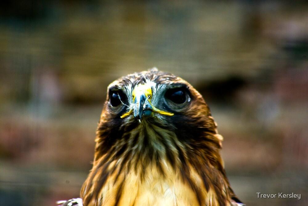 Hawk #2 by Trevor Kersley