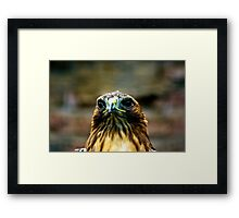 Hawk #2 Framed Print