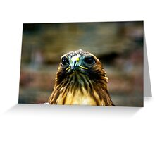 Hawk #2 Greeting Card