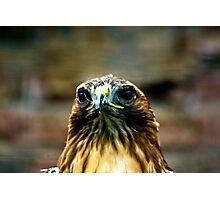 Hawk #2 Photographic Print