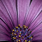 Purple Haze by Samuel Gundry