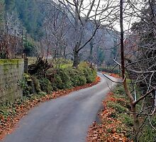 forest road by savas