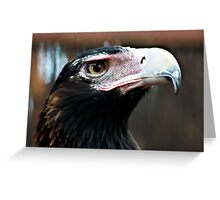Wedged Tailed Eagle Greeting Card