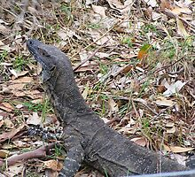 Goanna by Peter Shanahan