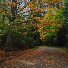 Autumn Again... by Aleksander