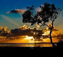 Autumn sunrise - Wellington Point Queensland by selaw