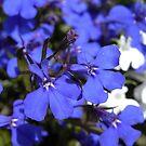 electric blue by Floralynne