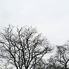 Trees - Phoenix Park in winter by UltimateHurl
