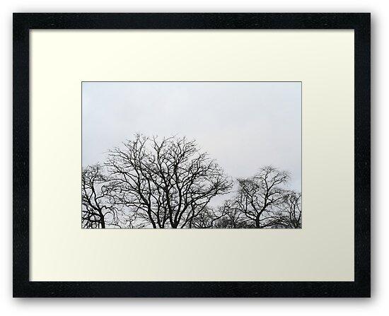 Trees - Phoenix Park in winter by UltimateHurl