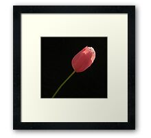 KISSED BY THE SUN Framed Print