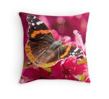 Admiral butterfly on crab apple tree blossoms Throw Pillow