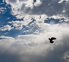 To the Heaven... by Freelancer