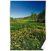 Spring Field Poster