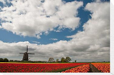 Dutch Roots by Brendan Schoon