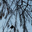 Nature Scenes by JillianLee