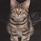 Diesel-Top cat by sarnia2