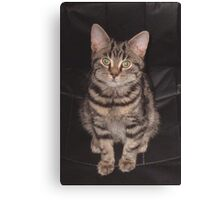 Diesel-Top cat Canvas Print
