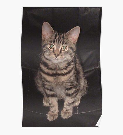 Diesel-Top cat Poster