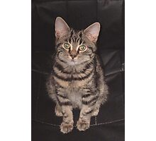Diesel-Top cat Photographic Print