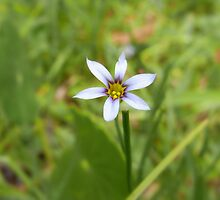 meadow X by Floralynne