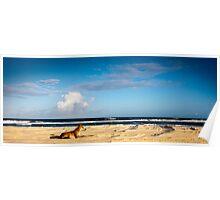 Gilded Dingo - Fraser Island Poster
