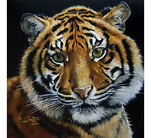 Tiger Light Photographic Print